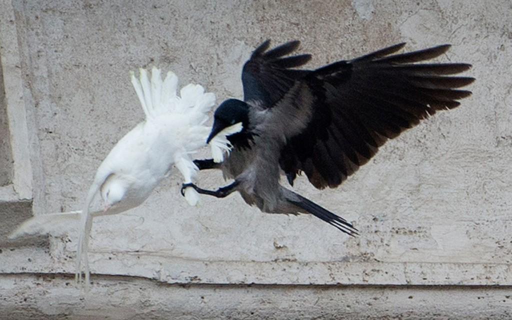 pope-dove-attack-ctr