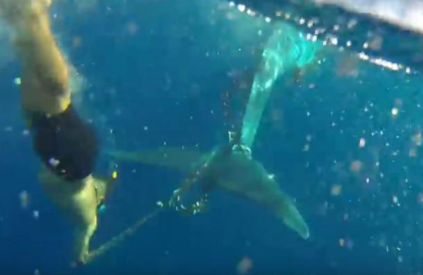 (Video) Hombre arriesga su vida y rescata a ballena atrapada en España