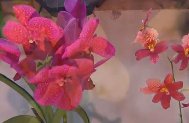 Orquídeas se robaron las miradas este fin de semana